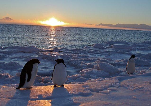 Pinguins-de-adélia no Antártico. Estação McMurdo. 25 de fevereiro, 2011