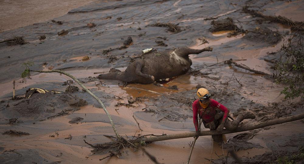 Um socorrista tenta resgatar o corpo de uma vaca morta em Bento Rodrigues, MG, em 8 de novembro de 2015