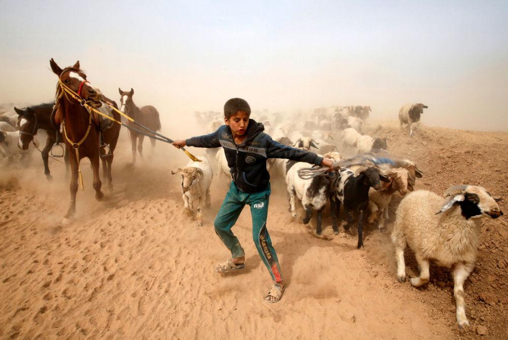 Pastor guia seu rebanho de ovelhas a um lugar seguro, perto da cidade iraquiana de Mossul, controlada por extremistas do Daesh (organização terrorista proibida na Rússia)