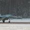 Su-35 chegam à Karélia