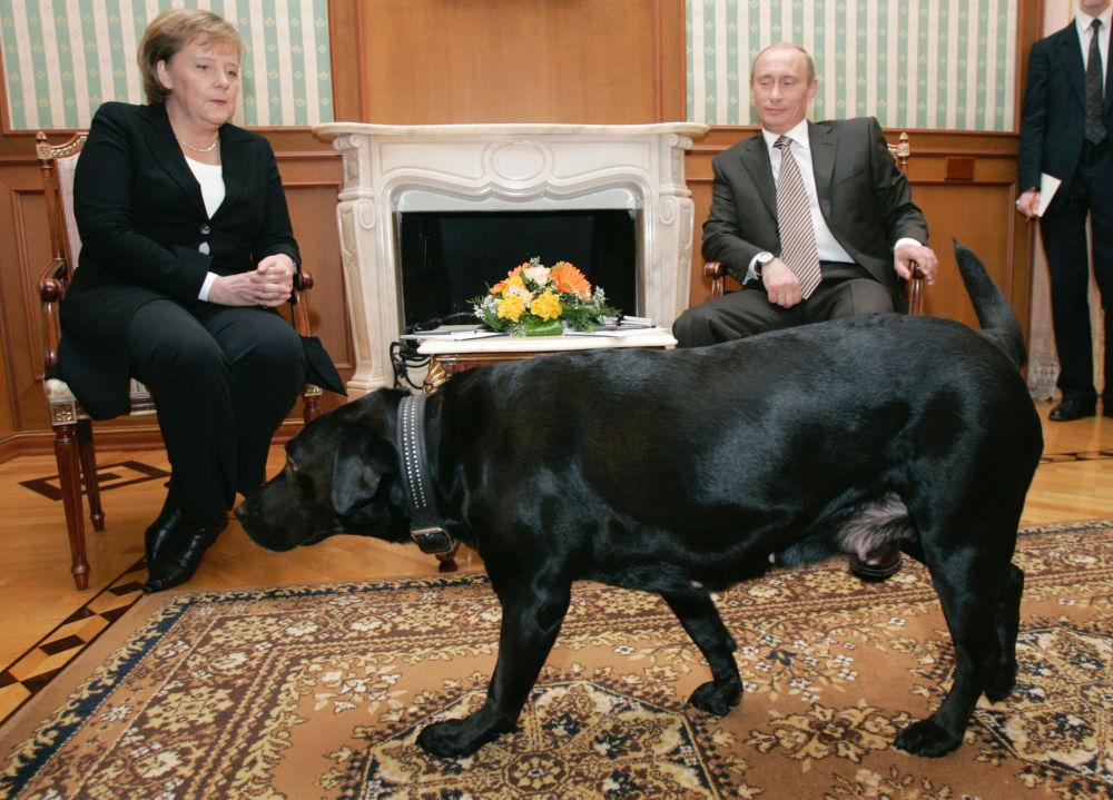 Chanceler da Alemanha Angela Merkel e presidente da Rússia Vladimir Putin durante um encontro na residência Bocharov Ruchei em Sochi
