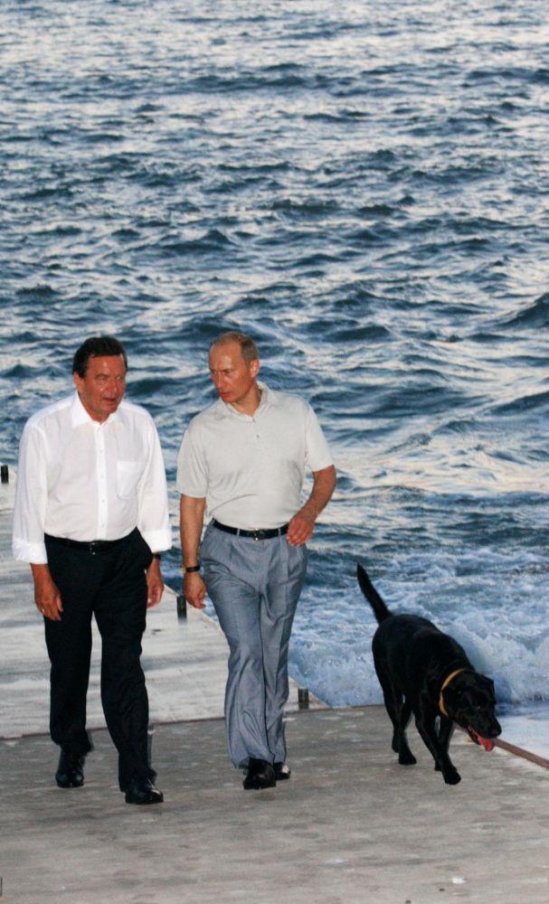 Encontro informal entre o presidente russo Vladimir Putin (com labrador Koni ao seu lado) e o então chanceler da Alemanha Gerhard Schroder em Sochi
