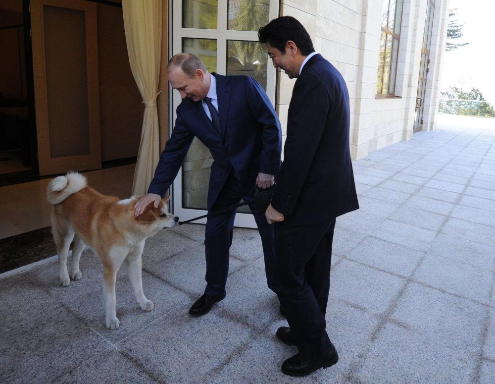 O presidente da Rússia Vladimir Putin com o premiê do Japão Shinzo Abe durante um encontro na residência Bocharov Ruchei, que foi marcada pela presença de Yume de raça akita-inu