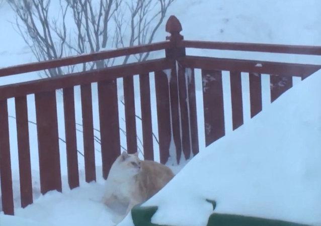 Gato 'ninja' abre túnel na neve para voltar para casa