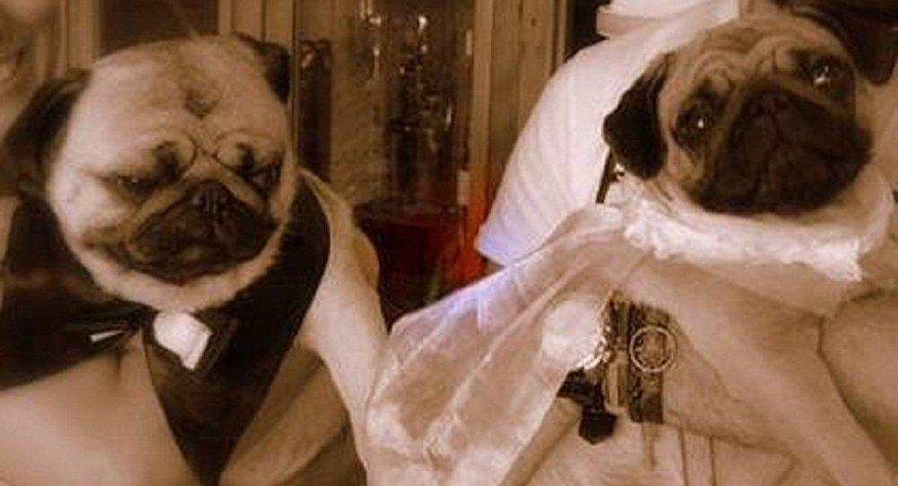 Casal de noivos Lanna e Habib