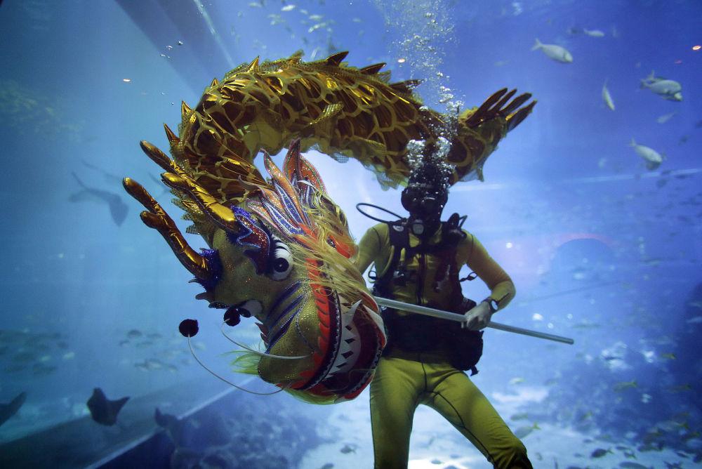 Mergulhador dança com dragão durante um show submarino no oceanário Resorts World Sentosa, em Singapura, durante comemoração do Ano Novo Chinês.