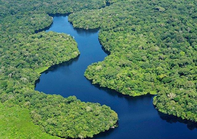 Criação de fundo de compensação ambiental está em debate no Congresso