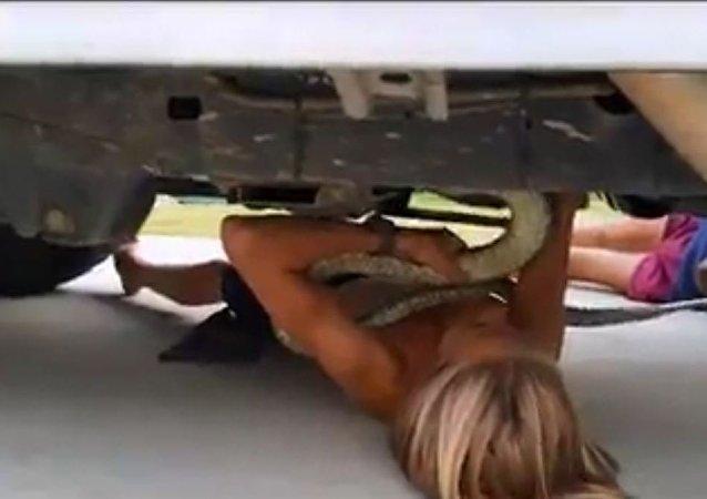 Menino australiano tira com suas próprias mãos serpente de dois metros debaixo do carro