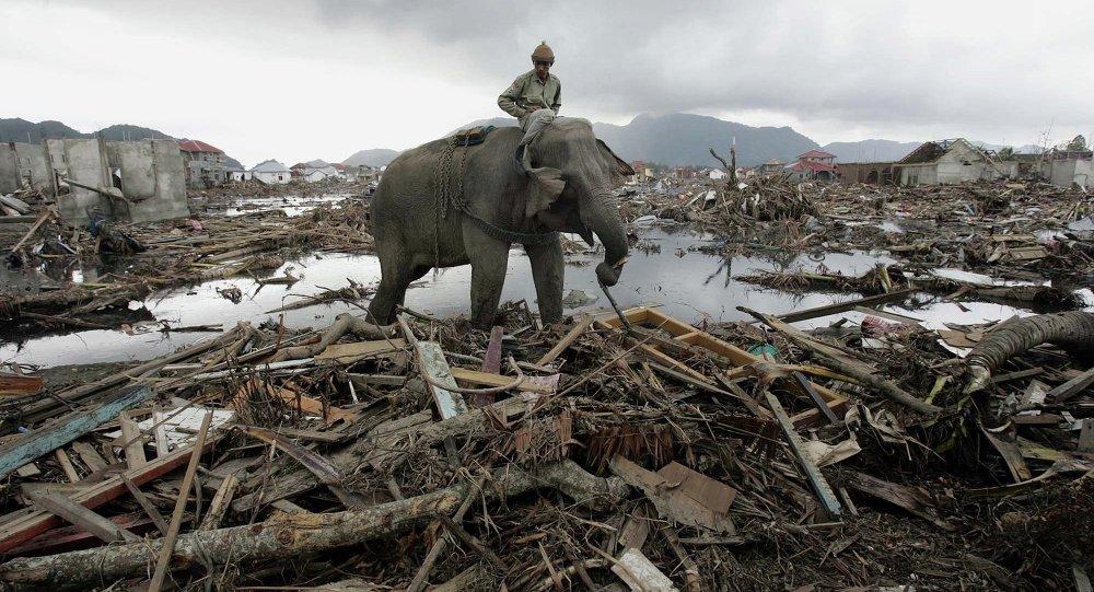 Elefante, que pertence ao ministério florestal, remove os detritos em Banda Aceh, na Indonésia, 10 de janeiro de 2005