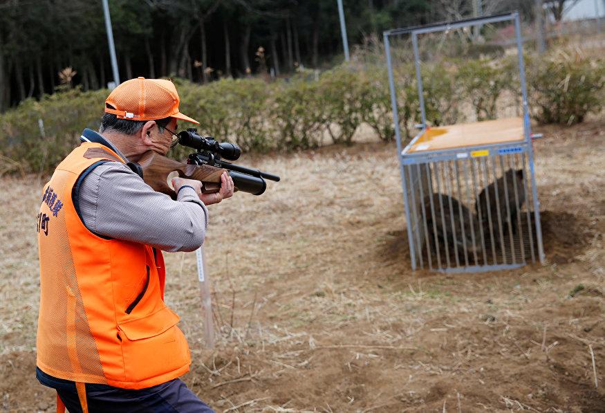 Um membro do grupo de controle de animais da cidade de Tomioka aponta a arma contra javalis selvagens em uma armadilha