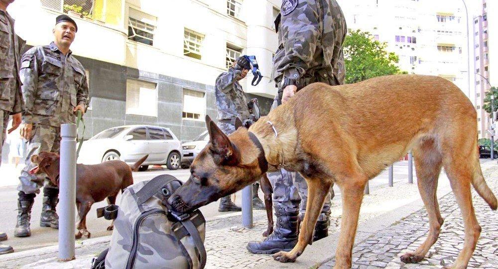 Policiais militares apreenderam três toneladas de drogas apenas no início deste ano
