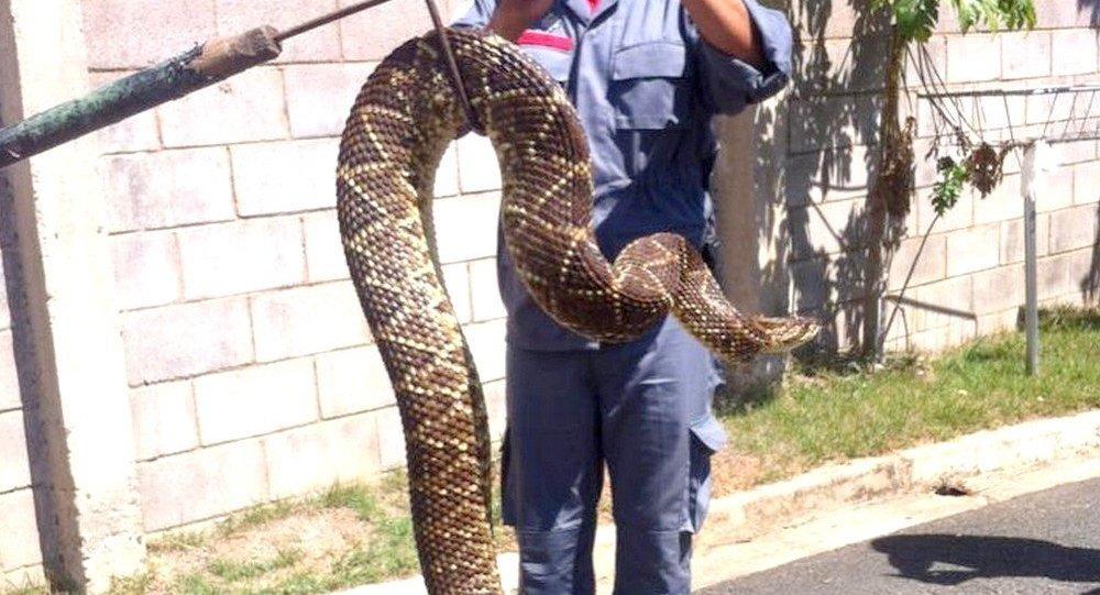 O condomínio capacitou 8 seguranças para fazer a captura das serpentes _Arquivo pessoal_Moradores