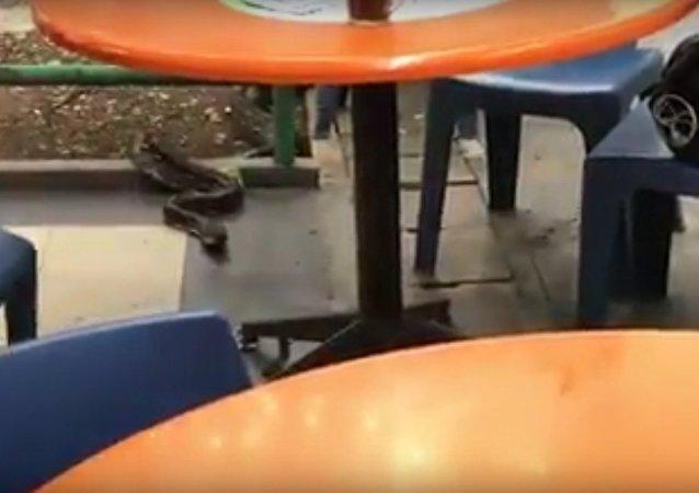 Serpente visita um restaurante em Singapore no dia 4 de junho