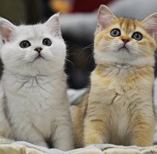 Gatos (foto de arquivo)