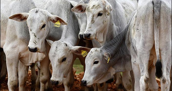 Desde meados de março, UE reforça controles para entrada da carne brasileira