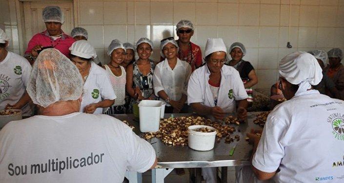 Cooperativa dos Agricultores do Vale do Amanhecer (Coopavam), em Juruena, no noroeste do Mato Grosso