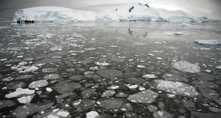 Gelo flutuando na superfície do mar na parte ocidental da Península Antártica em 5 de março de 2016