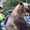 Urso passeia pelas ruas da cidade russa em motocicleta