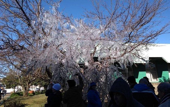 Temperaturas geladas fazem árvore com cristais de gelo no Centro de São Joaquim, onde a mínima foi de -5º C