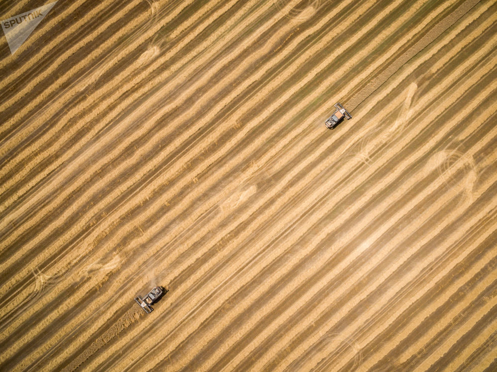 Colheita do trigo no sul da Rússia