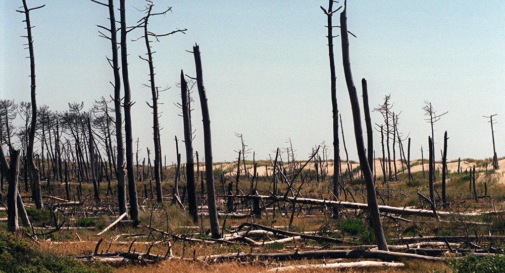 Consequências de um incêndio florestal na ilha de Oléron, na região francesa de Poitou-Charentes (arquivo)