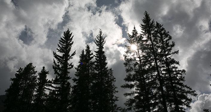 Floresta no Canadá
