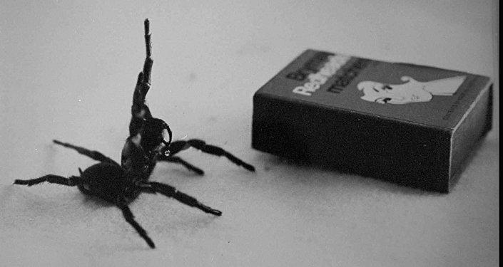 Aranha da Austrália