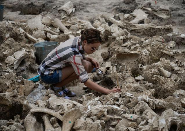 Processo de limpeza dos ossos de um mamute descobertos durante as escavações arqueológicas no museu Kostenki, na região russa de Voronezh