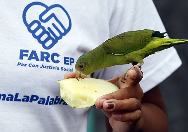 Membro das FARC alimenta passarinha em zona de segurança