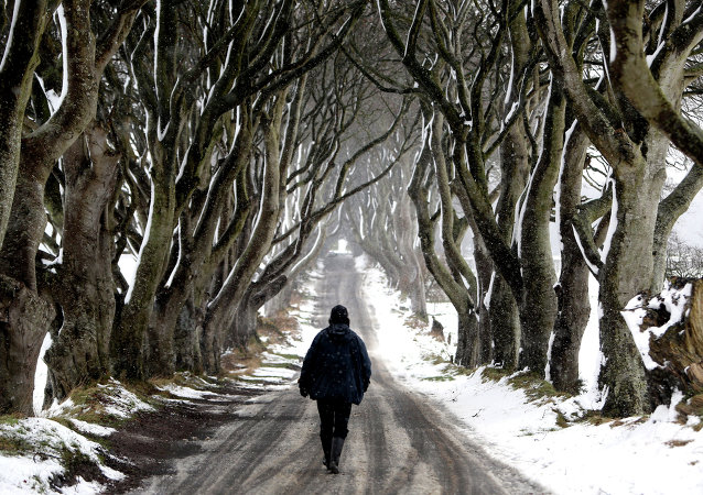 Túnel de árvores do Dark Hedges, onde foram gravadas cenas da série Game of Thrones, Irlanda do Norte
