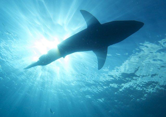 Um tubarão no mar