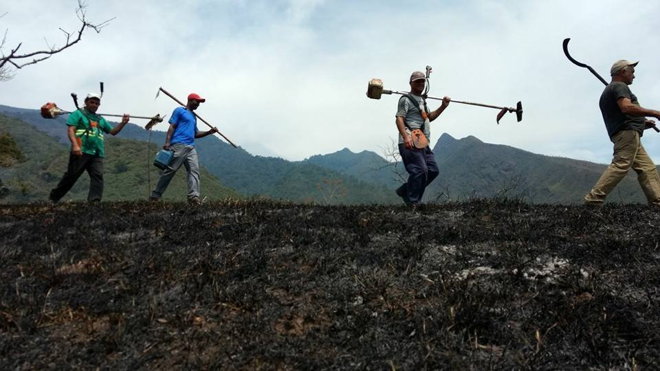 O fogo consumiu uma área equivalente a 1,4 mil campos de futebol.
