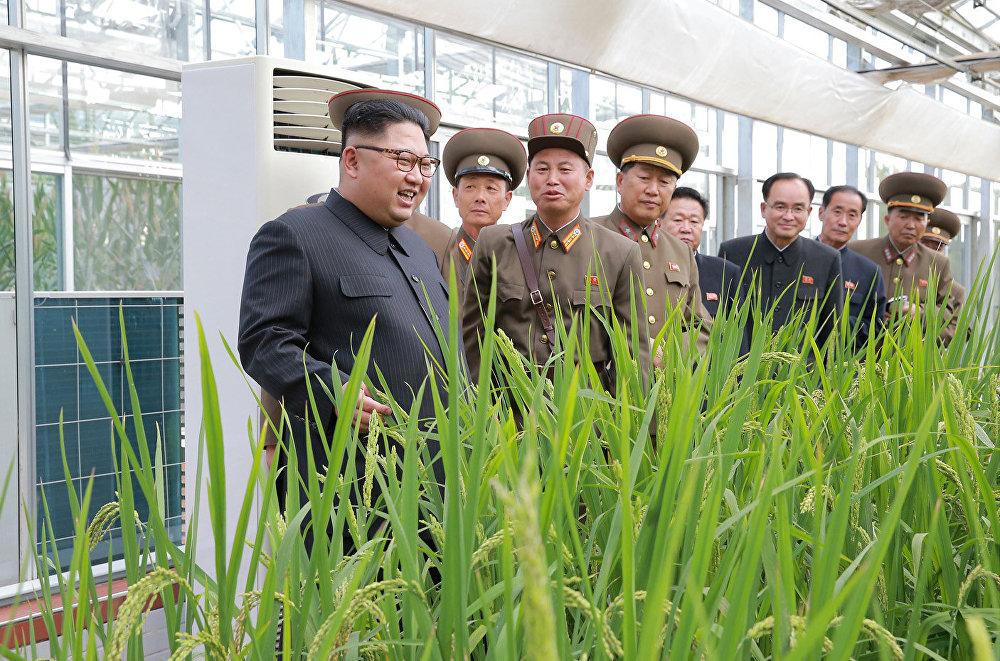 Kim Jong-un visitou a Fazenda Número 1166.