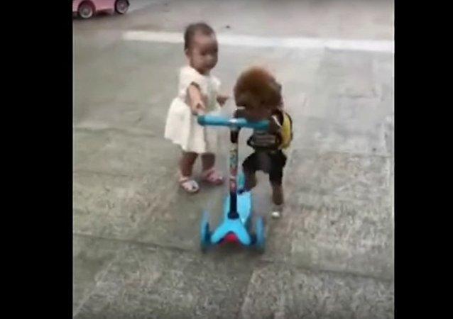 Cachorro 'leva' scooter de uma criança
