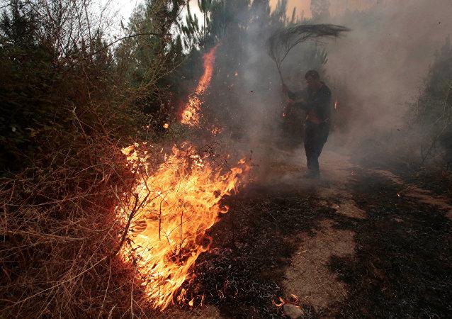 Homem luta para apagar chamas em floresta do município de Arbo, na Galícia