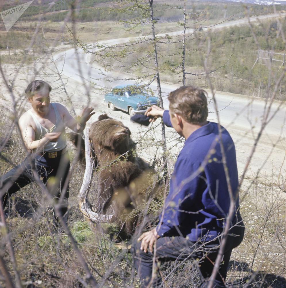 Jovens com um urso marrom que saiu da taiga na Estrada de Kolyma, 1967