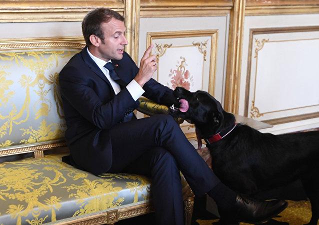 Presidente francês, Emmanuel Macron, com seu cachorro Nemo no Palácio do Eliseu, Paris, 30 de agosto de 2017
