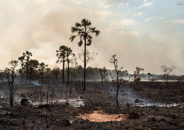 Vegetação destruída pelas chamas no Parque Nacional da Chapada dos Veadeiros